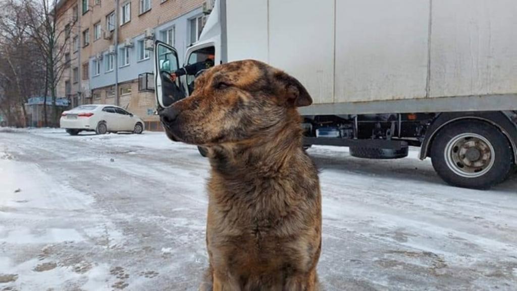 Новости Днепра про Бесполезная трата денег: власти Новомосковска против установки памятника бездомному псу