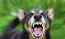 Не друг: на Прикарпатье бешеный пес покусал свою хозяйку и отправил часть города на карантин