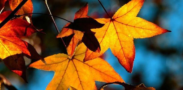 Погода в Днепре в понедельник, 18 октября: облачно и без осадков