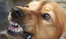 Не дала перевести деньги: в Днепре на Тополе собака вцепилась в руку мужчины