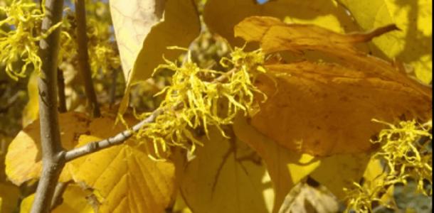В Днепре в ботсаду ДНУ расцвело экзотическое растение