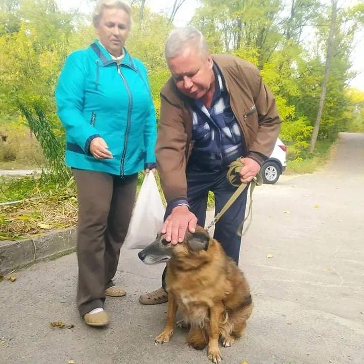 Новости Днепра про Стала ненужной: днепряне вернули в приют собаку спустя 7 лет