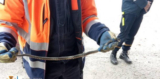 В Днепре спасатели дважды за один день доставали змей из машин