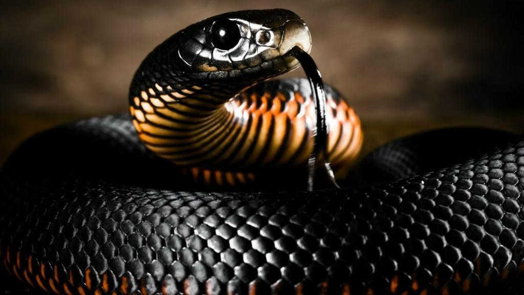 Новости Днепра про Новая фобия: криворожане обнаружили змею в вентиляции