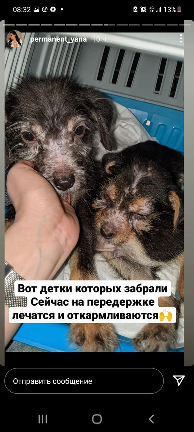 Новости Днепра про Мужчина выкинул щенка из окна: в Каменском ищут новых хозяев для других собак