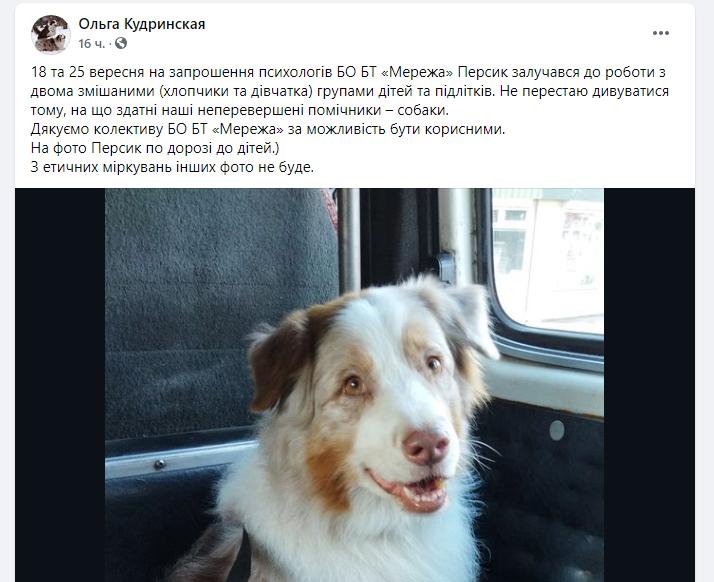 Новости Днепра про В Кривом Роге пес стал психологом и лечит детей