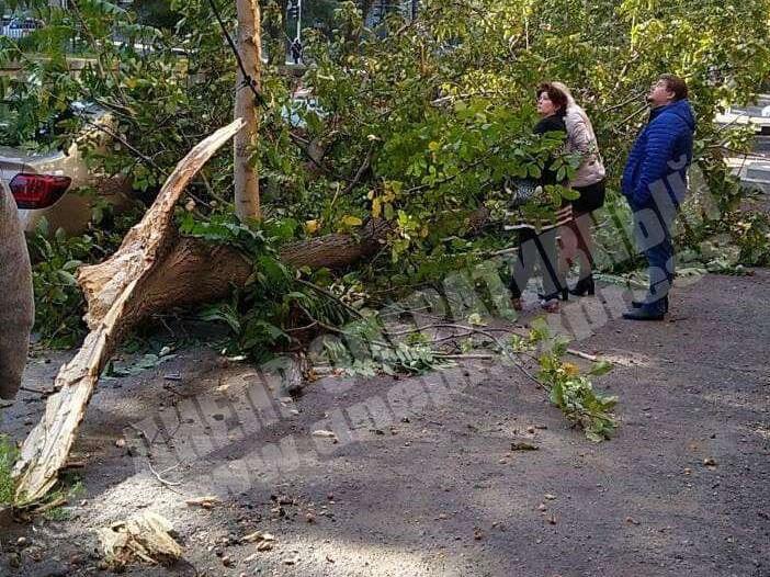 Новости Днепра про Ветка в Днепре рухнула на три припаркованных автомобиля (ВИДЕО)