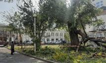 Будьте осторожны: в Днепре у входа в парк Глобы упала огромная ветка