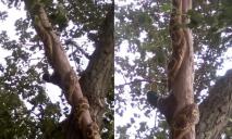 Как настоящая: днепрян два года пугала змея, которая «жила» на дереве