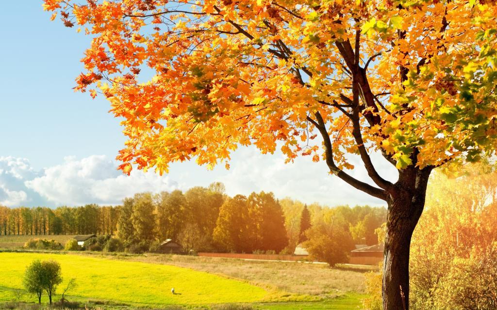 Новости Днепра про 7 октября — какой сегодня праздник?