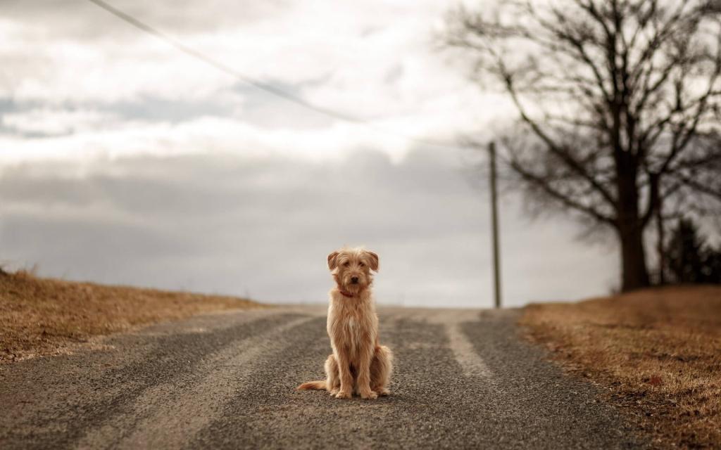Новости Днепра про На Игрени сбили ребенка с собакой: мальчик остался без друга