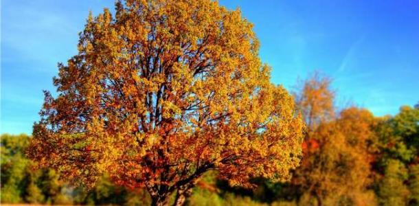 Золотая осень: сегодня днепрян ждет хорошая погода